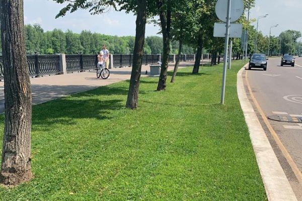 Рулонный газон Городской в ландшафтном дизайне